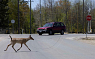 Deer Crossing at Rmblewood Rd and 45th Street
